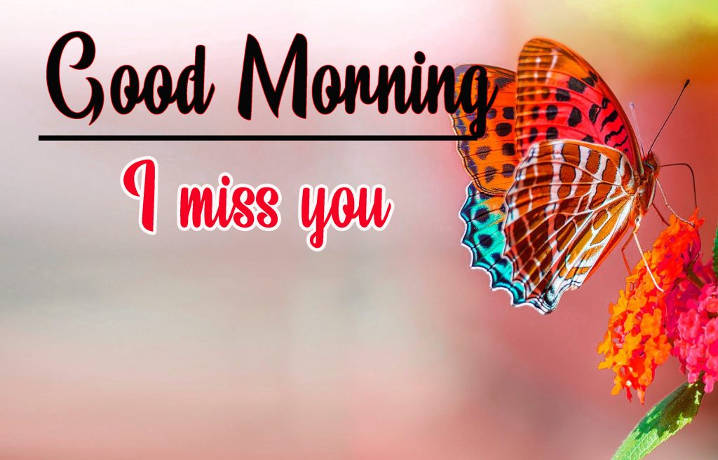 Latest Good Morning HD Images  Download