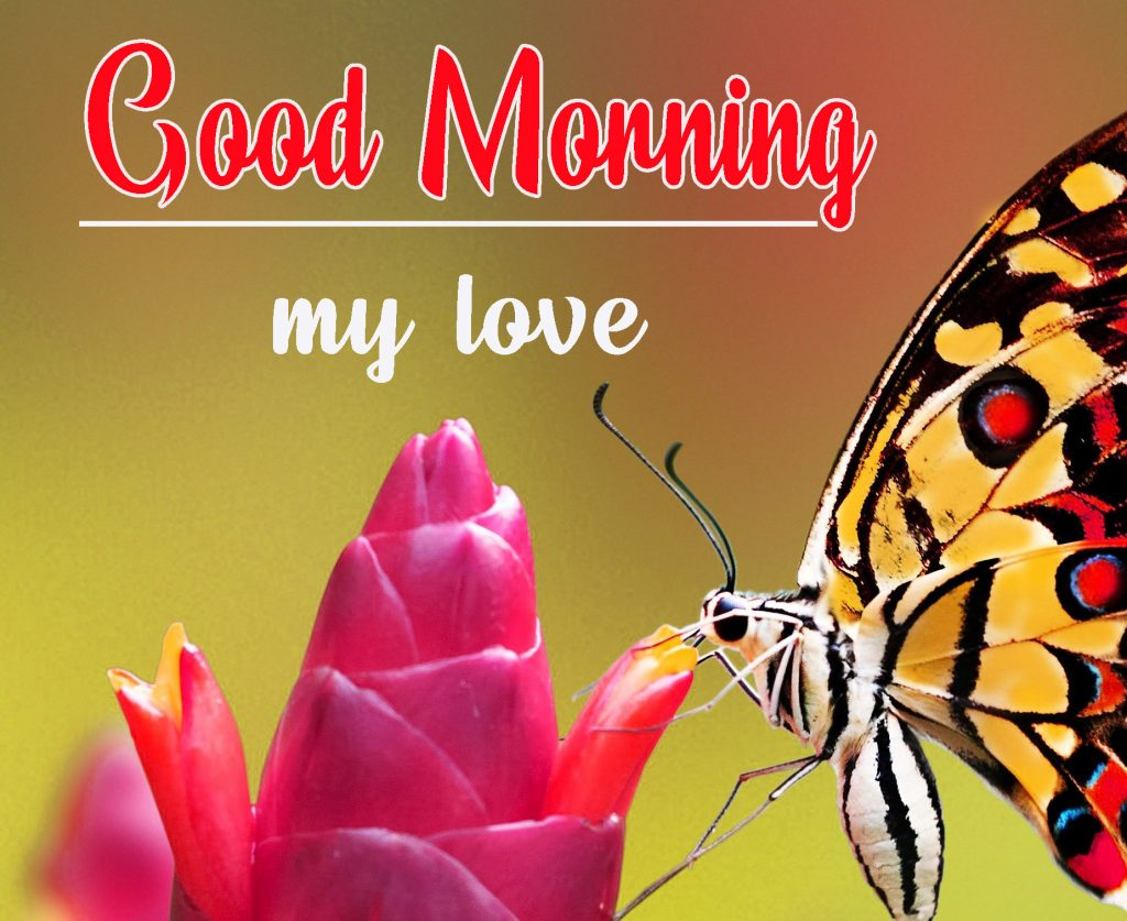 Good Morning HD Images Photo