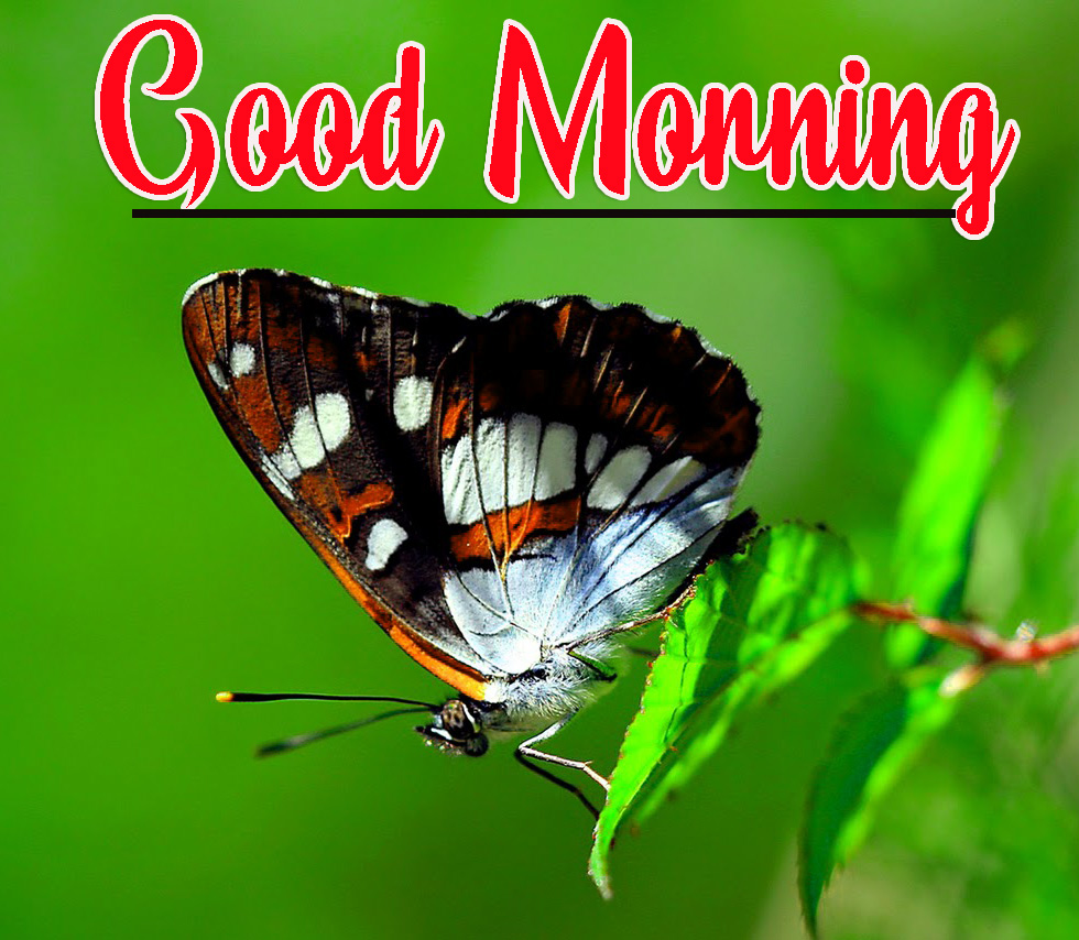 Best Good Morning HD Images Photo