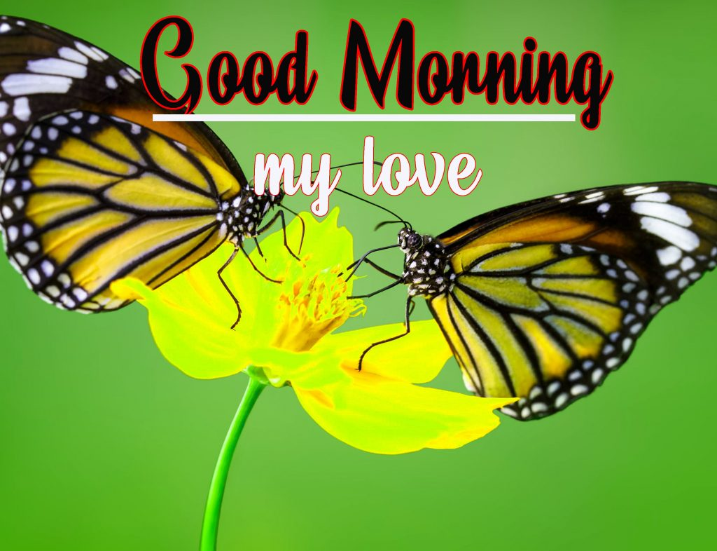 Good Morning HD Photo  Images