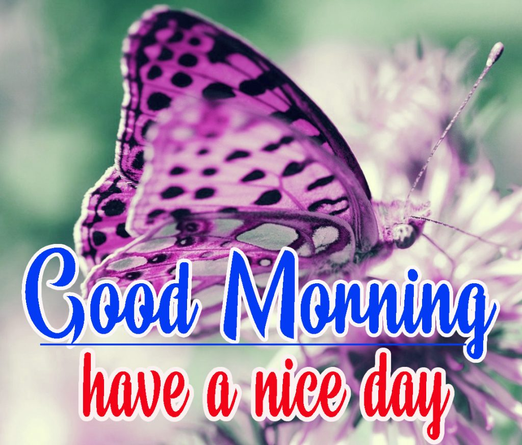 Good Morning HD Wallpaper  Images