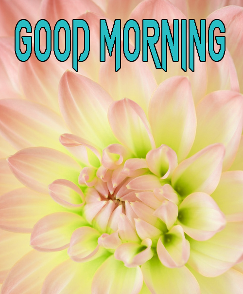 Free Good Morning Images Photo HD Download