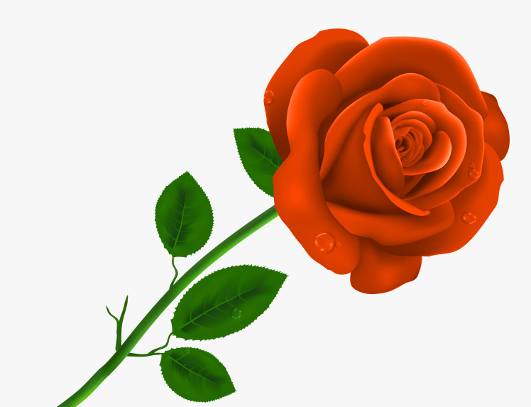 Girlfriend / Wife Red Rose  hd images wallpaper download for Whatsapp
