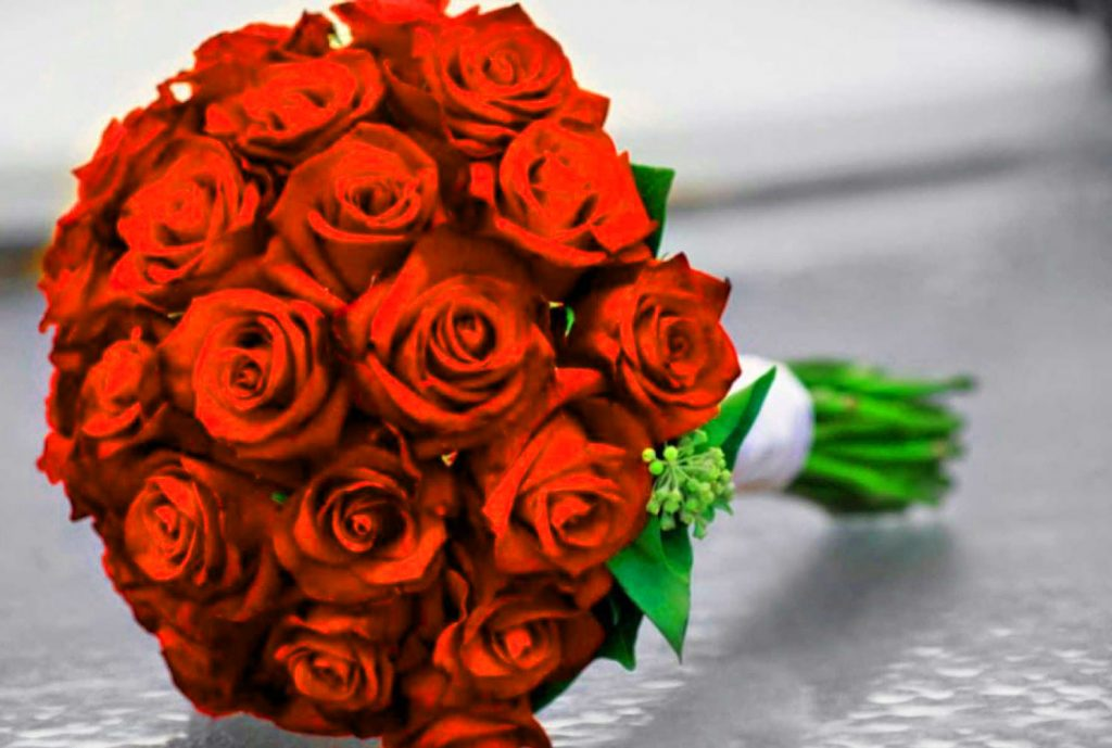 Top Girlfriend / Wife Red Rose hd wallpaper free download For Whatsapp / Facebook