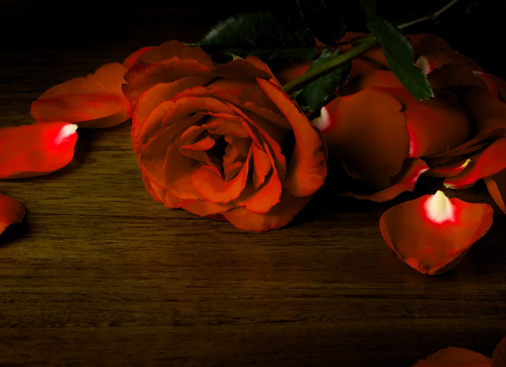 Girlfriend / Wife Red Rose hd images Wallpaper Pics free Download