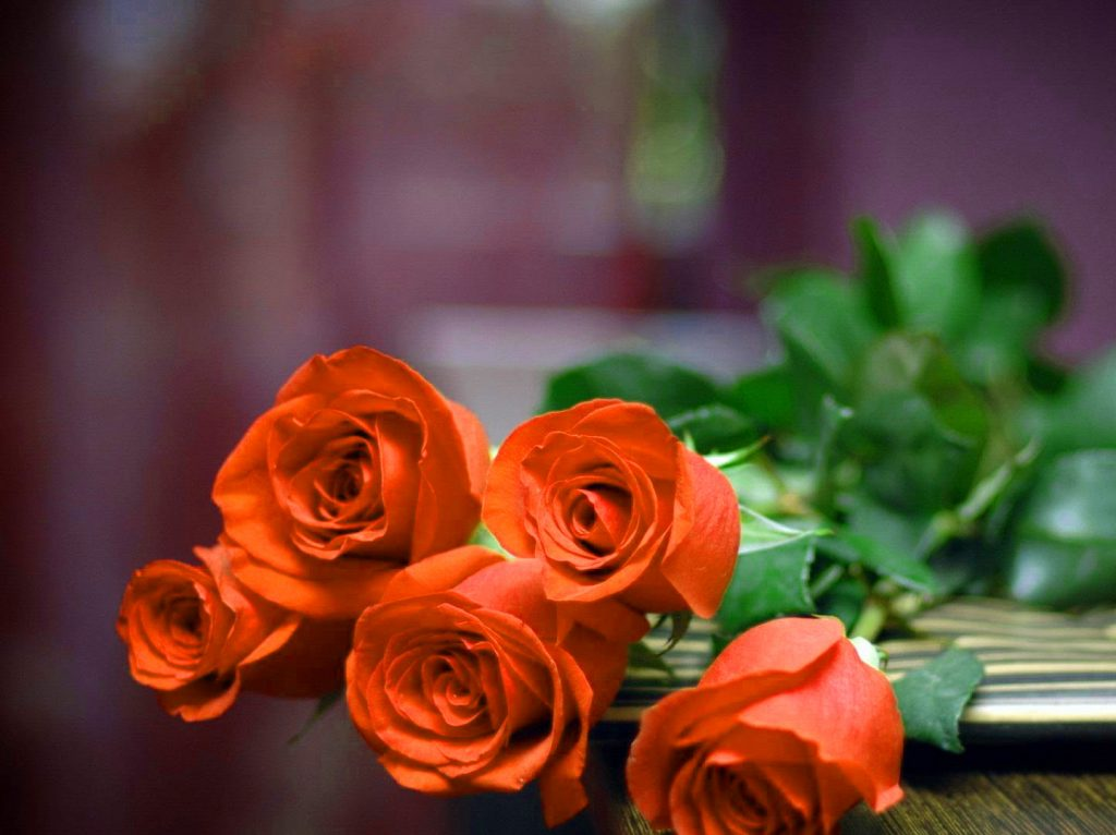 Girlfriend / Wife Red Rose hd picture download