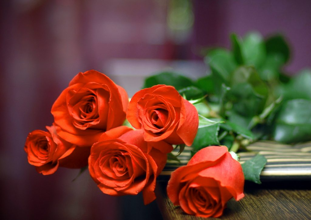 Girlfriend / Wife Red Rose images wallpaper download