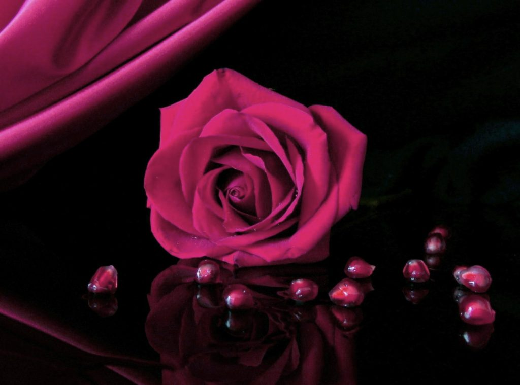 Girlfriend / Wife Red Rose hd photo download