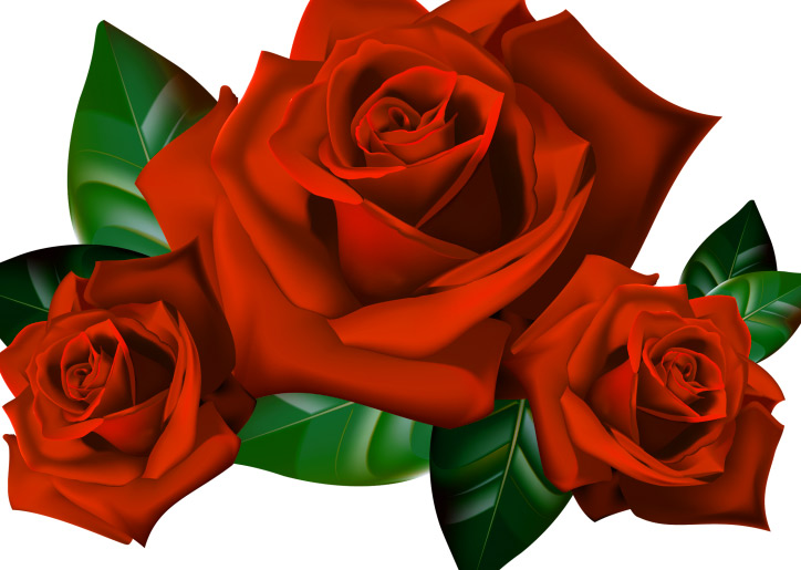 Girlfriend / Wife Red Rose hd pictures