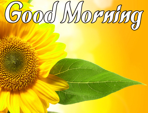 Sunflower Good Morning Images Free