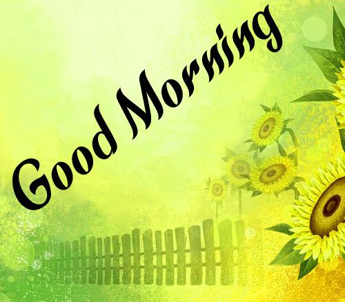 Sunflower Good Morning Hd Pics