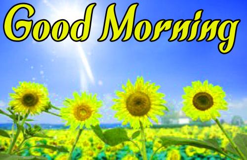 Sunflower Good Morning Wallpaper For Facebook