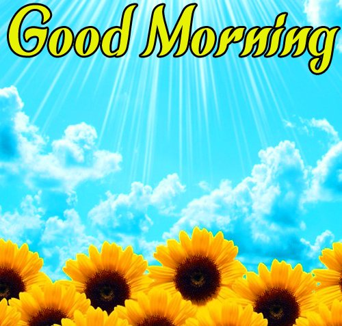 Sunflower Good Morning Pics Free Download