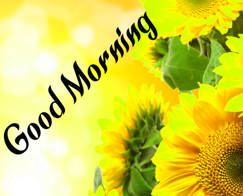 NewSunflower Good Morning Images