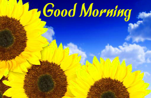 LatestSunflower Good Morning Pics
