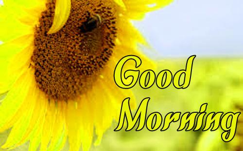 BestSunflower Good Morning Images