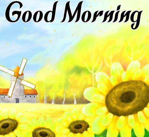 Sunflower Good Morning Free Photo