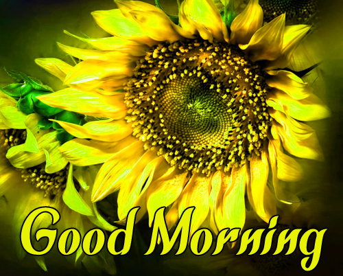 Sunflower Good Morning Free Download