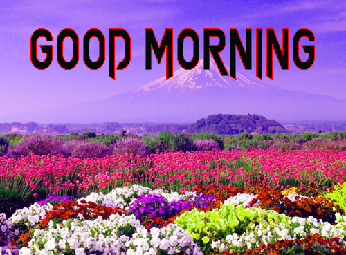 Free Good Morning Images Wallpaper Free Download