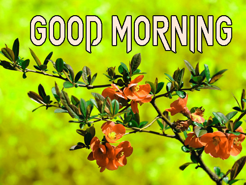 good morning Pics HD Download