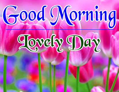 Flowers Good Morning Images