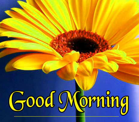 Flowers Good Morning Wishes