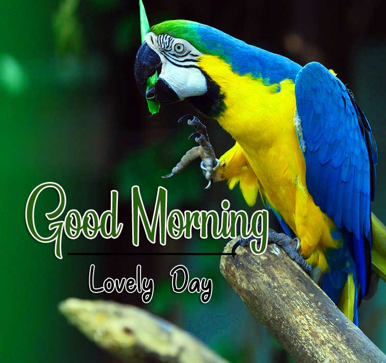 Good Morning Images hd 1080p Pics Wallpaper for Whatsapp