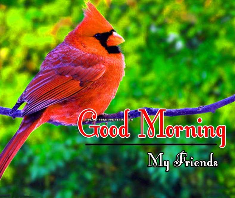 Good Morning Images hd 1080p Wallpaper Download