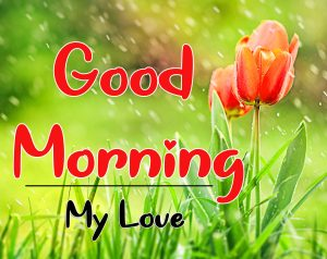 Latest ALL Nature Good Morning Images Pics DOWNLOAD