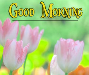 Nature Good Morning Images Pics New Download