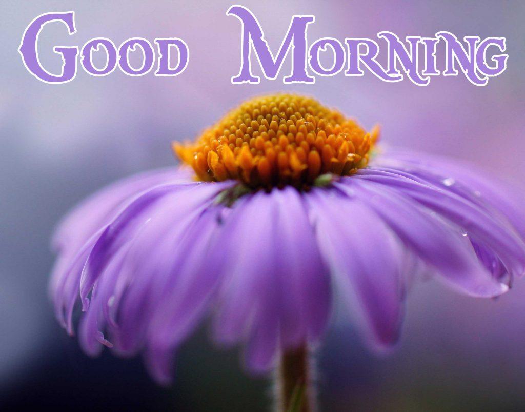 Thursday Good Morning Wallpaper Pics Download