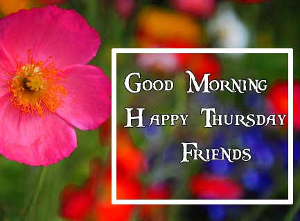 Thursday Good Morning Wishes Pics Wallpaper Download
