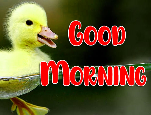 Friend Good Morning Pics HD