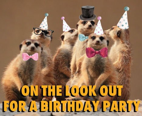 Funny Happy Birthday Images Photo Wallpaper Free Download