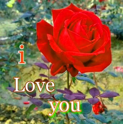 Romantic Love Couple Whatsapp DP Wallpaper Images