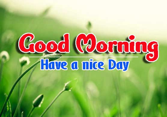 Nature Good Morning Images pics photo hd download
