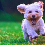 Cute Whatsapp Dp Images With Puppy