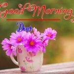 Best Flower Good Morning Images wallpaper for whatsapp