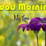 Best Flower Good Morning Images pictures free download