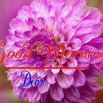Best Flower Good Morning Images wallpaper download