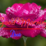 Best Flower Good Morning Images pics photo download