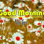 Best Flower Good Morning Images pics photo hd download