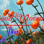 Best Flower Good Morning Images photo pics hd