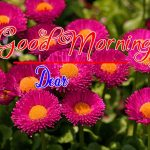 Best Flower Good Morning Images photo pics download