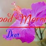 Best Flower Good Morning Images pics photo hd