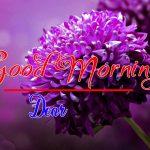 Best Flower Good Morning Images wallpaper free hd
