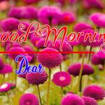 Best Flower Good Morning Images pictures free hd