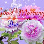 Best Flower Good Morning Images photo download