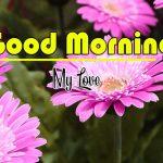 Best Flower Good Morning Images photo wallpaper download
