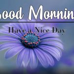 Best Flower Good Morning Images photo wallpaper free download